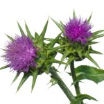 silymarin from milk thistle